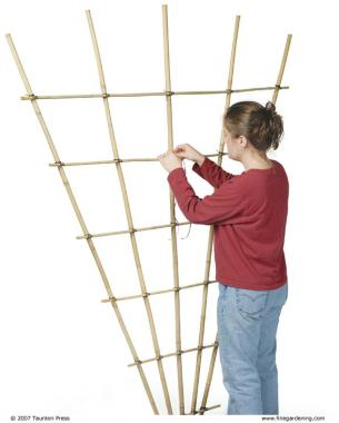 Build a Bamboo Trellis