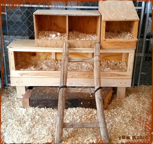 Custom Nest Boxes