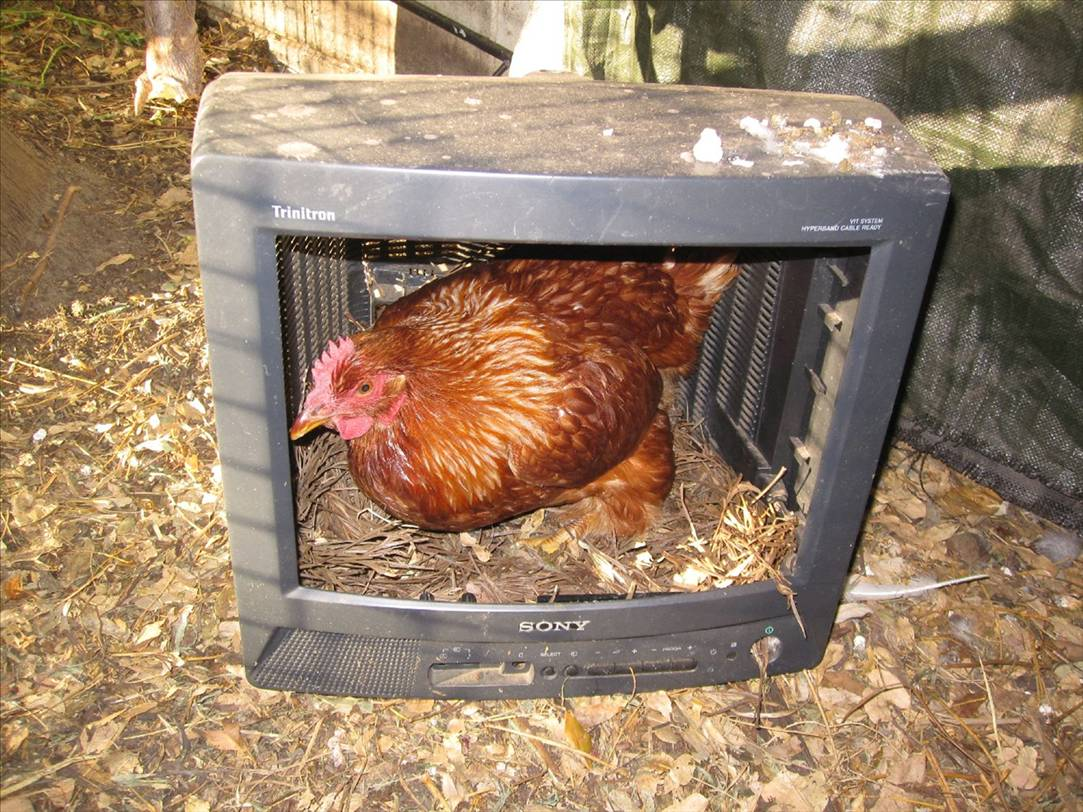 Easy Amp Cheap Diy Chicken Nesting Boxes