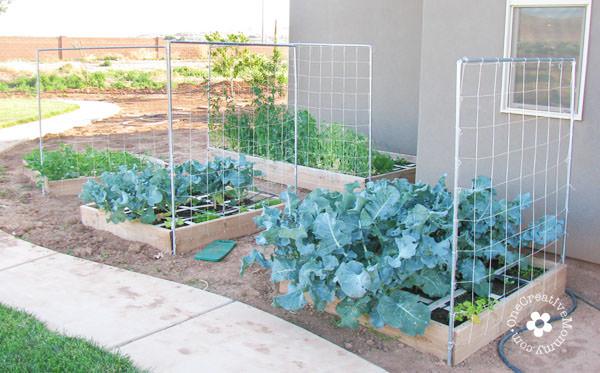 19 Awesome Diy Trellis Ideas For Your Garden