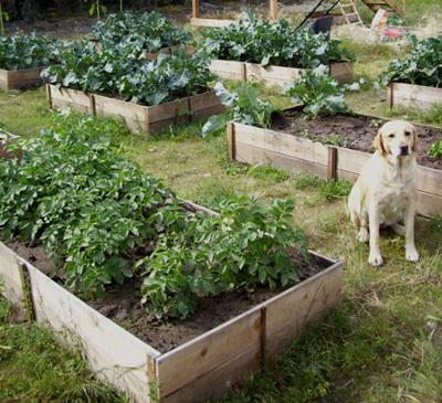 12 Free Raised Garden Bed Plans – Raised Garden Beds Plans Free